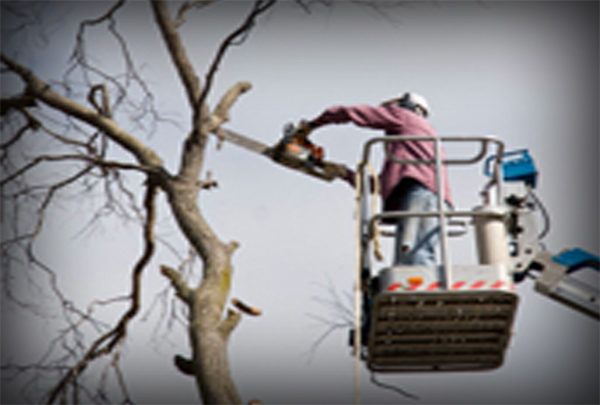 Quality Tree Service, Inc.